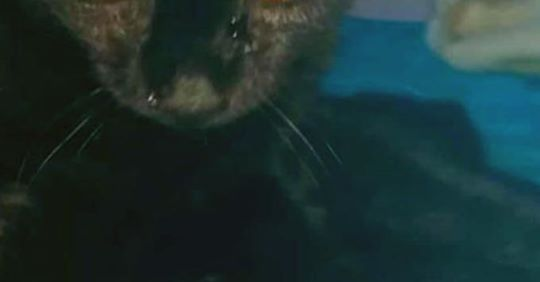 Zvonilka ze Sluníčka - Kočičí přání