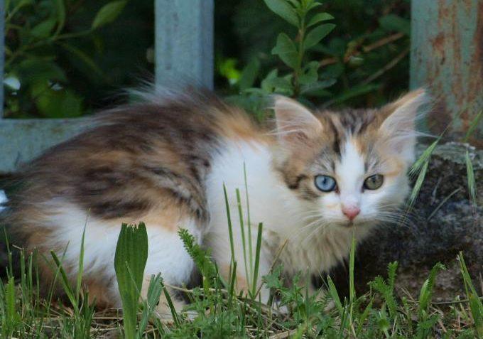 Krmení pro toulavé kočky - Kočičí domov Sluníčko z.s. - Kočičí přání