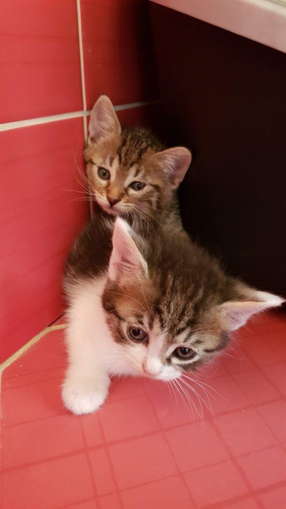 Mladé mokré kočička obrázky