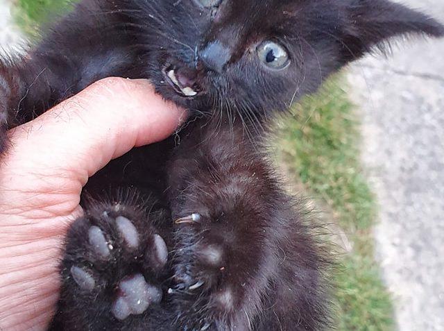 """malá """"obyčejná"""" černá ŽÍŽA..."""