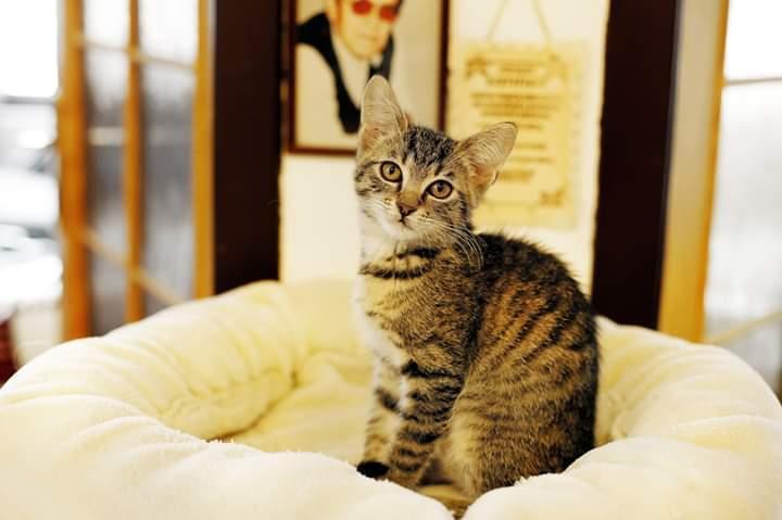 Na točitém schodišti před jiným domem seděla černá kočka a pozorovala, jak.
