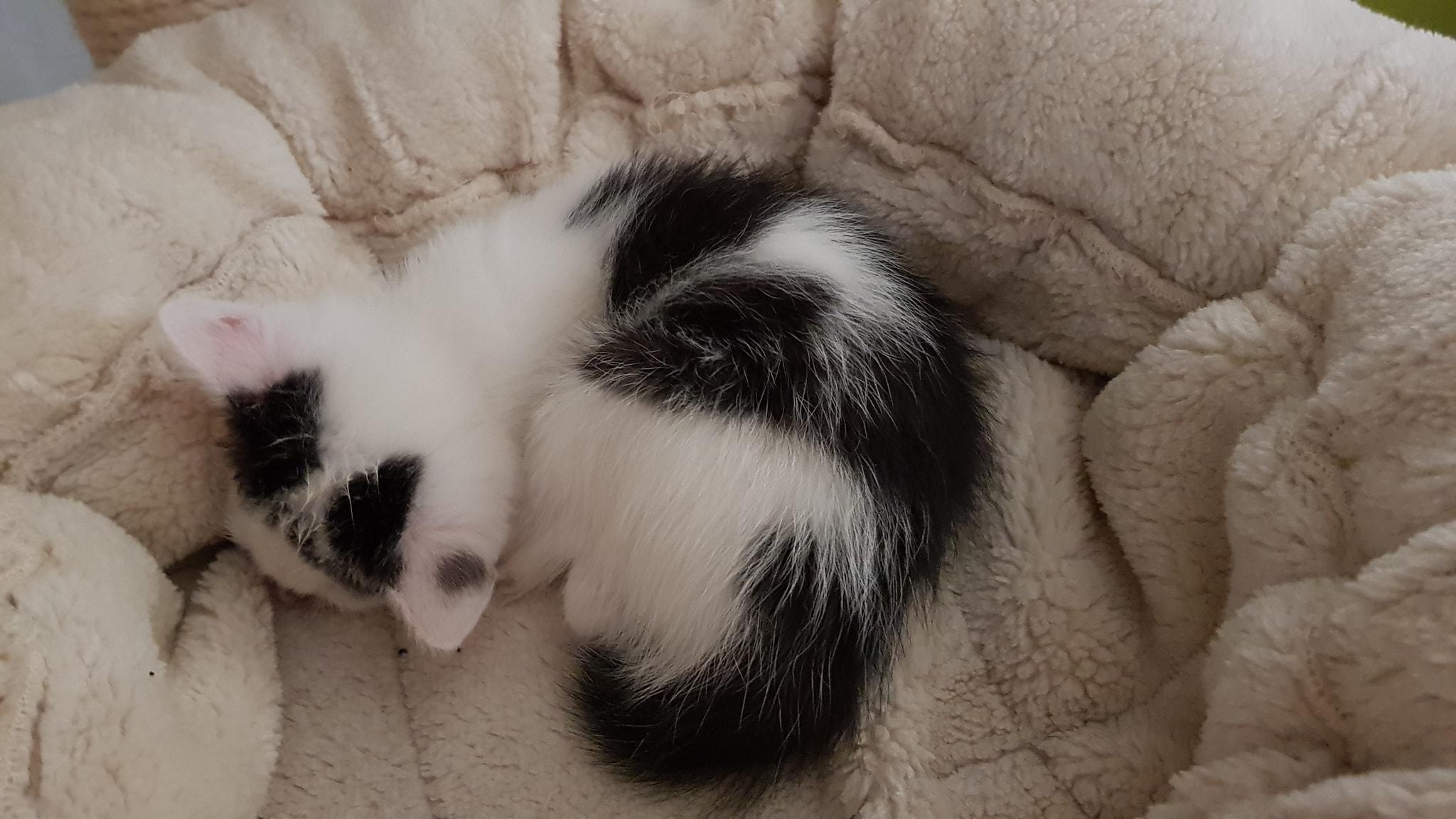 Namáčení mokré černé kočička