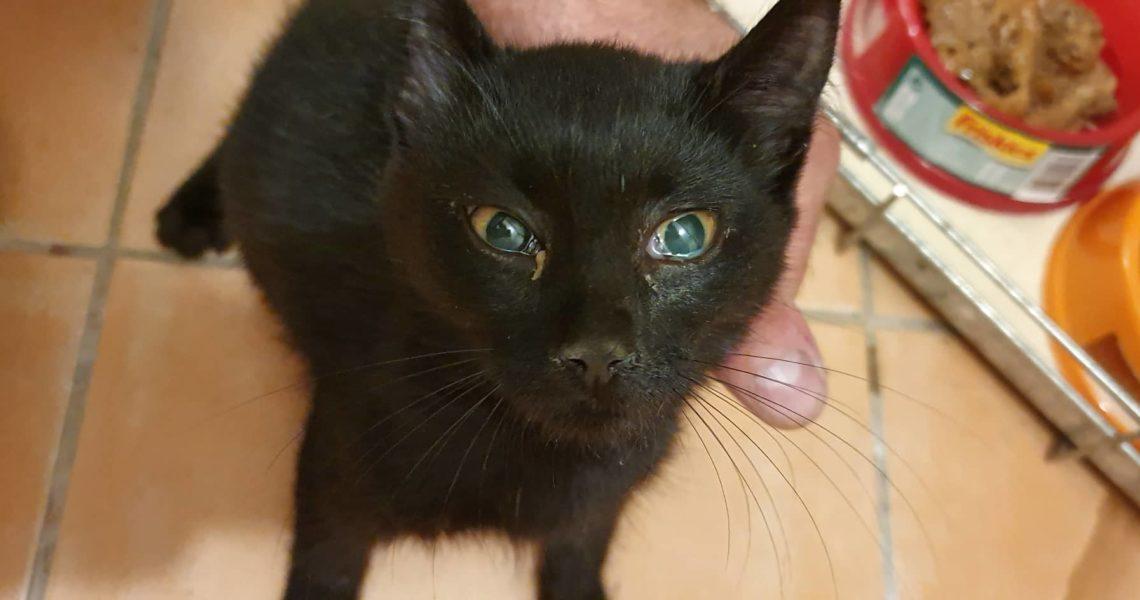 černá kočička bolest
