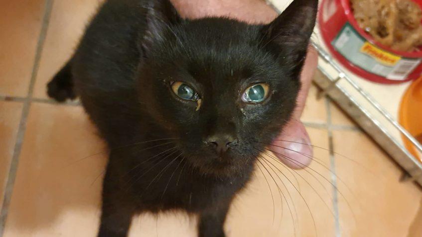 Stará černá maminky kočička