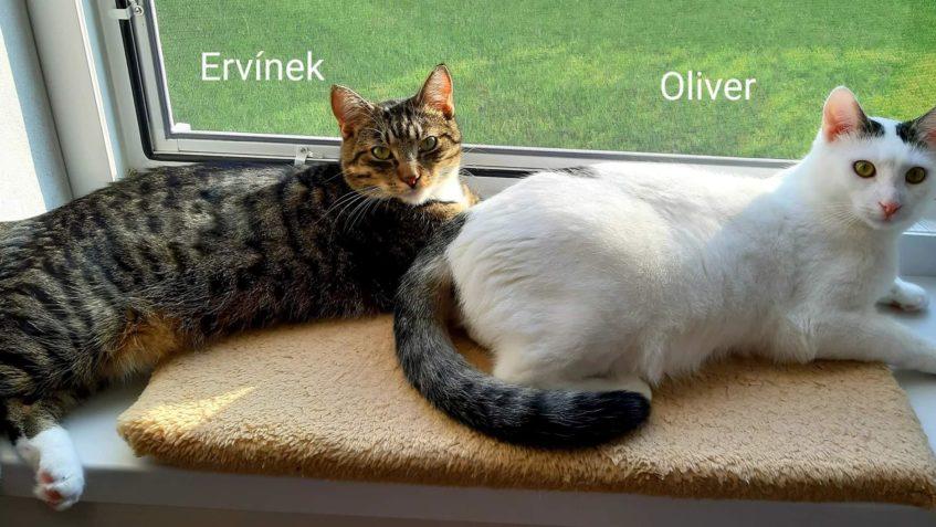 ERVÍNEK & OLIVER...