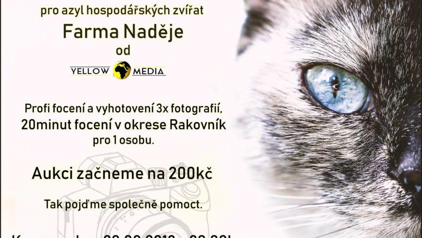 Pro naše kočičky  už se dražilo  a teď Yellow World Media po...