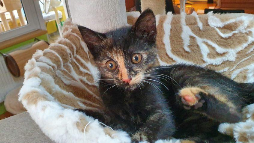 malá kočička pix