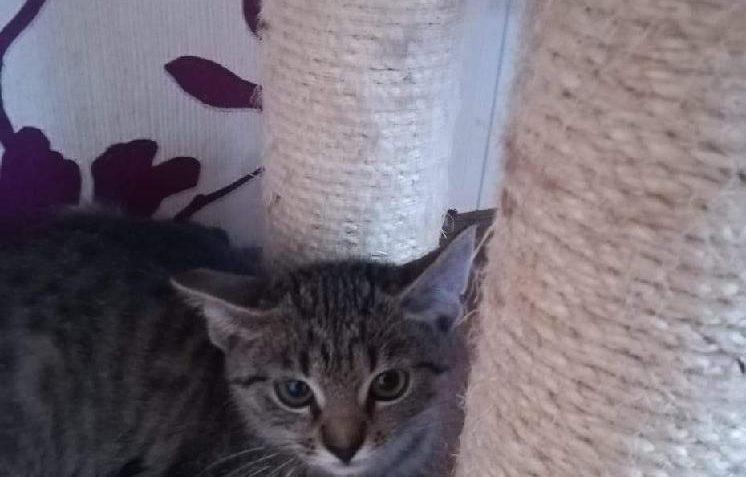 Mladá dáma kočička fotky