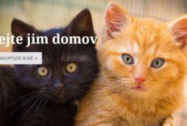 Kočičí domov Sluníčko | útulek pro kočky