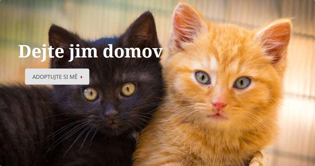 Kočičí domov Sluníčko   útulek pro kočky
