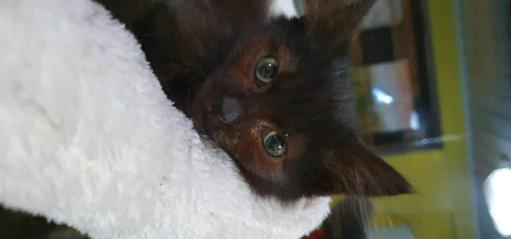 Těsné lil kočička