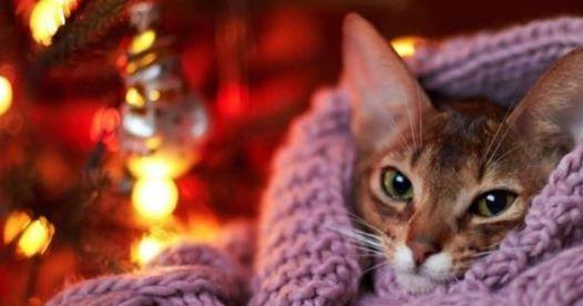21.Umisťovací výstava koček bez domova