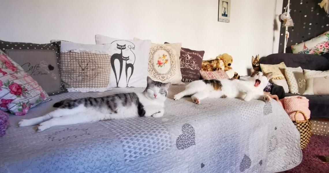KOČIČKA ROZÁRKA  (z Kočičího domova Sluníčko z.s) a její par...