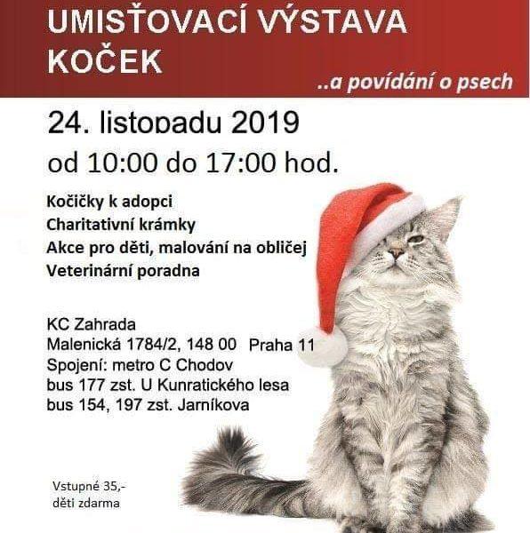 Tahle pobaltská kočička je velkou konkurencí brazilských.