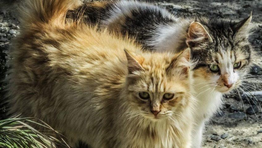 Kdo jsou gaučoví množitelé a proč se kvůli nim Česko topí v záplavě koček