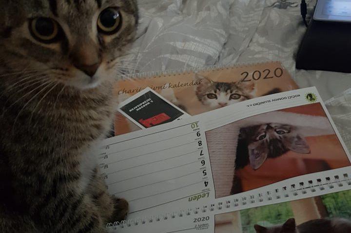 Kocourek Cézárek už kalendář má a prý je přímo božíA co vy.....