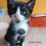 Nově přijatá koťata do depozita u Jitky. Dva kluci stáří še...