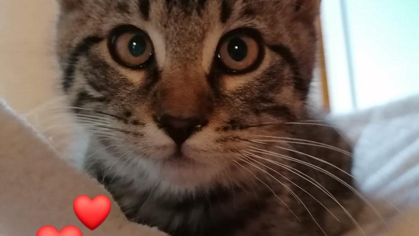 Včera přijatá dvě mourovatá, tříměsíční koťata do depozita ...