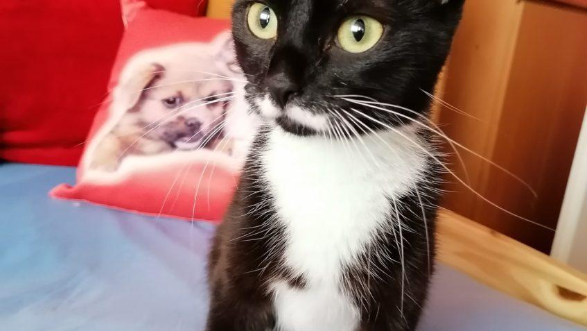 Včerejší příjem do depozita u Jitky. Kočička Frenkie Mia Ras...