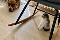 Na obrázku může být: dog a indoor