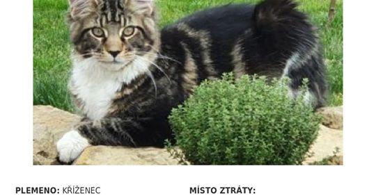 DALŠÍ ZTRACENÝ KOCOUREK, ROSÍME O SDÍLENÍ Zvýšení odměny za ...
