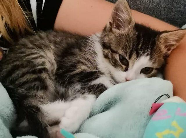 Dnes odjela spolu domů koťata Pepe a Jonda. Mají úžasnou ...