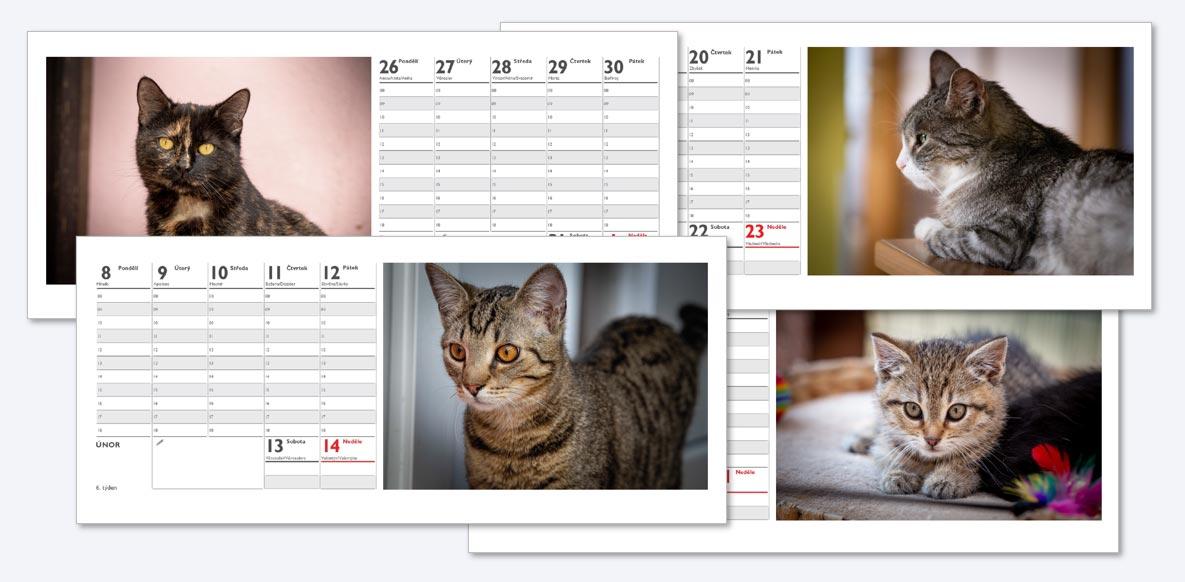 Kalendář 2021 - kočičí domov Sluníčko