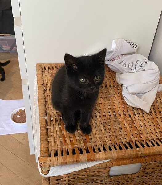 PUSÍ  Kočička Pusí posílá pozdrav do Sluníčka   ...