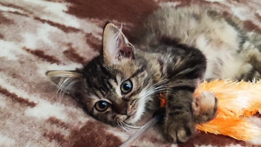 """Tohle nádherné kotě doslova vytržené """"zubaté"""" z ..."""