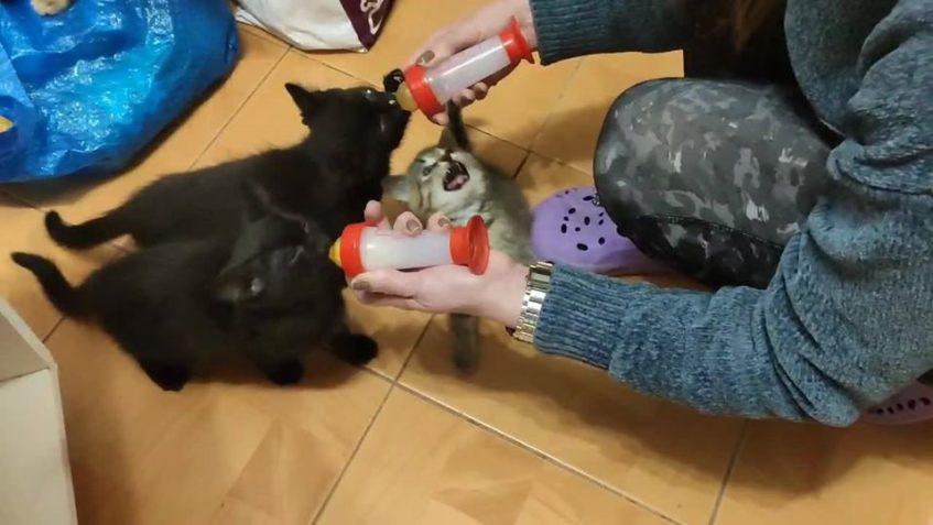 Krmení koťátek nebo divé zvěře? Miláčkové, Tchib...