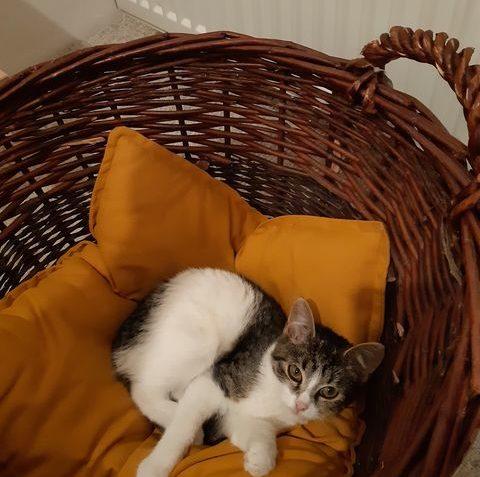 MERY Kočička Mery se rozhodla nafotit kalendář :...