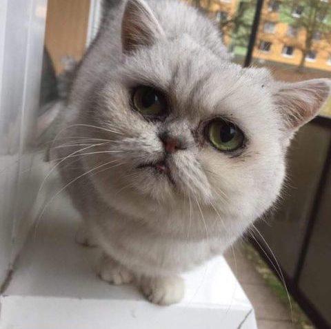 KOMTESA  Komtesa zdraví do Sluníčka. Kočička má ...