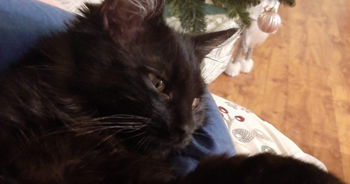 ATINKA Vánoční pozdrav posílá Atinka  Ahoj, zdra...