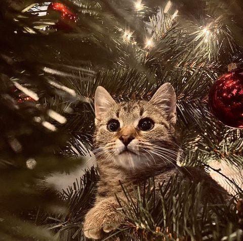 Za chvilku bude po Vánocích, tak ještě pár vánoč...