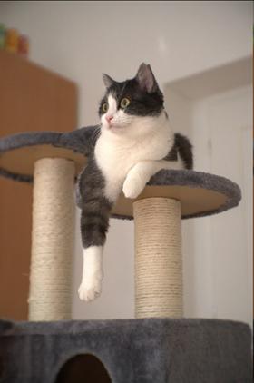 Na obrázku může být: kočka, boty a indoor