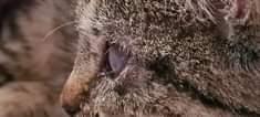 Může jít o detail perská kočka