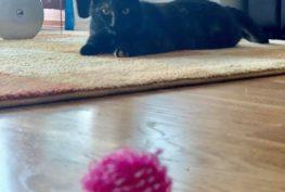 Bojavka (Truffles)  Kočička Bojavka se má v nové...