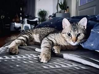 Na obrázku může být: kočka
