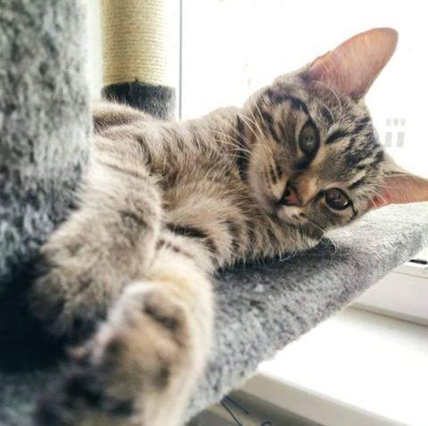 LESINKA Dobrý den,   Zdraví Vás kočička Jessinka...