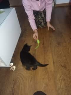 Na obrázku může být: jeden člověk nebo víc lidí, kočka a indoor