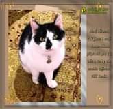 Na obrázku může být: cat a text