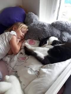 Může jít o obrázek child a cat