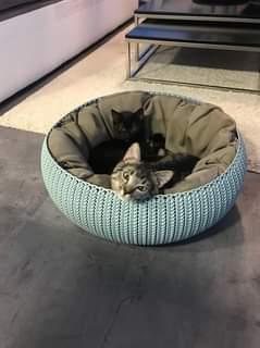 Na obrázku může být: cat a indoor