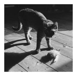 Může jít o černobílý obrázek kočka