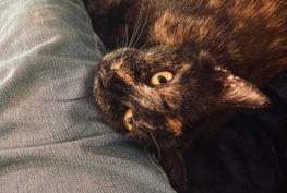 BOJAVKA  Kočička Bojavka si užívá svůj vysněný d...
