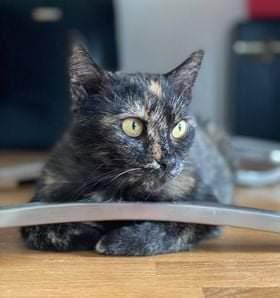 Může jít o obrázek cat a text