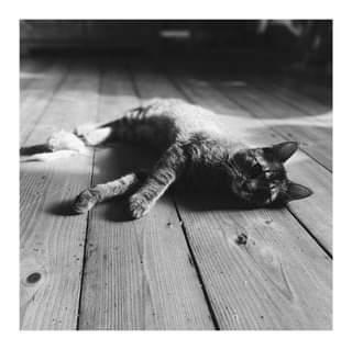 Může jít o černobílý obrázek cat a indoor