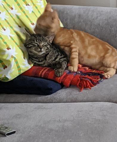 ISLA a DUPLÍK  Naši bývalí kočičáci se mají dobř...