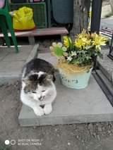 Může jít o obrázek cat a flower