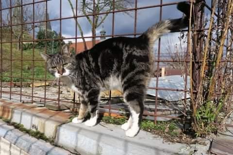 Může jít o obrázek cat a outdoors